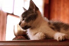 猫猫名字大全洋气的